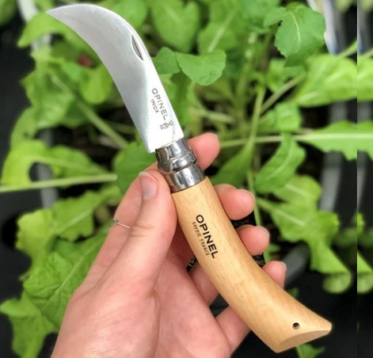 Opinel #08 Pruning Knife - Stainless Steel